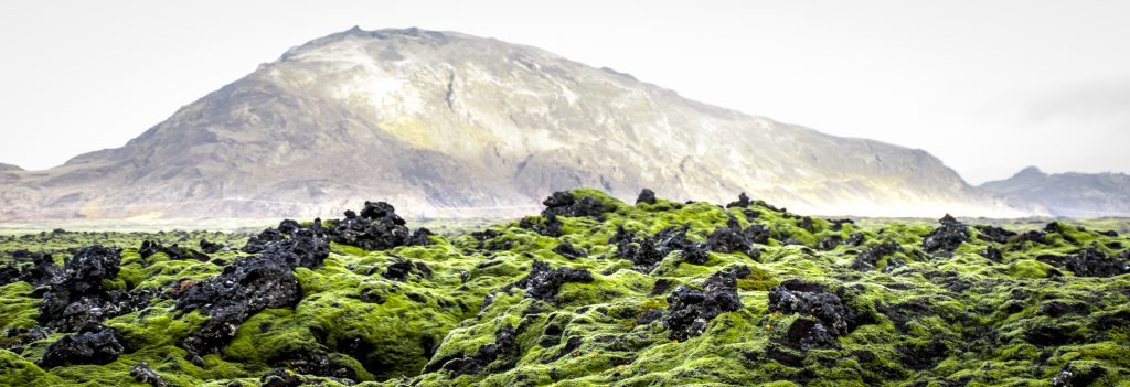 Old lava flows covered with moss in Iceland